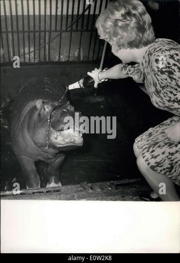 23. Dezember 1960 - tauft Nilpferd Sponsor, Paola, ihr Hippo in Champagner ESS. Stockbild