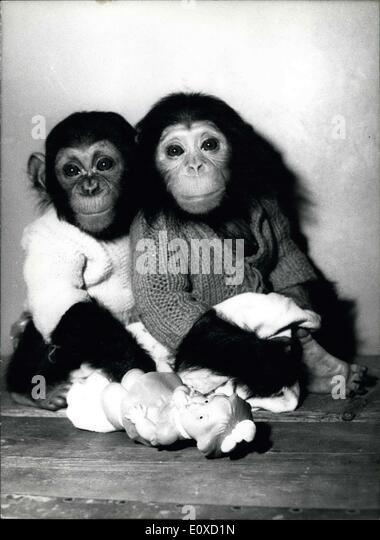 20. April 1966 - zwei Schimpansen Babys: Aussehen ein bisschen wütend beim Fotografen. Michl und Fanny dienen Stockbild