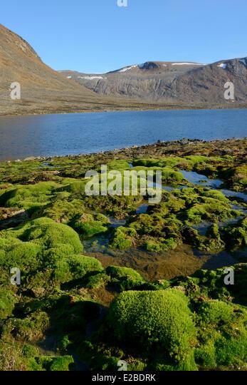 Grönland, Nuussuaq-Halbinsel, bemoosten Bach und Gletschersee Stockbild
