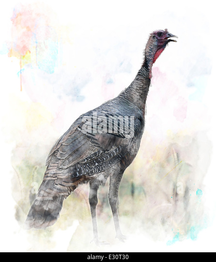 Digitales Aquarell der Türkei Vogel Stockbild
