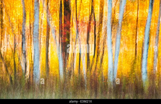 Eine kreative Zusammenfassung der Hintergrundbeleuchtung fallen farbige Bäume in Nord-Michigan, USA. Stockbild