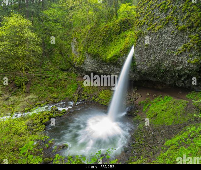 Columbia Gorge National Scenic Area, oder Pferdeschwanz fällt auf Schachtelhalm creek Stockbild