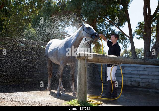 Mitte erwachsener Mann Waschen Pferd mit Schlauch Stockbild
