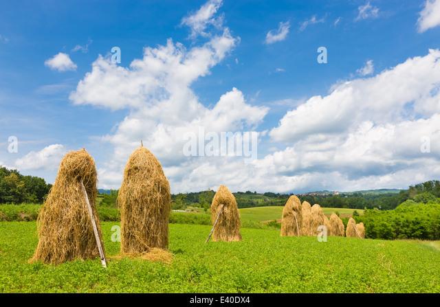 Traditionelle Heu Stapeln auf dem Feld. Stockbild
