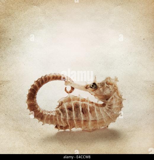 Vintage-Hintergrund mit Seepferdchen Stockbild
