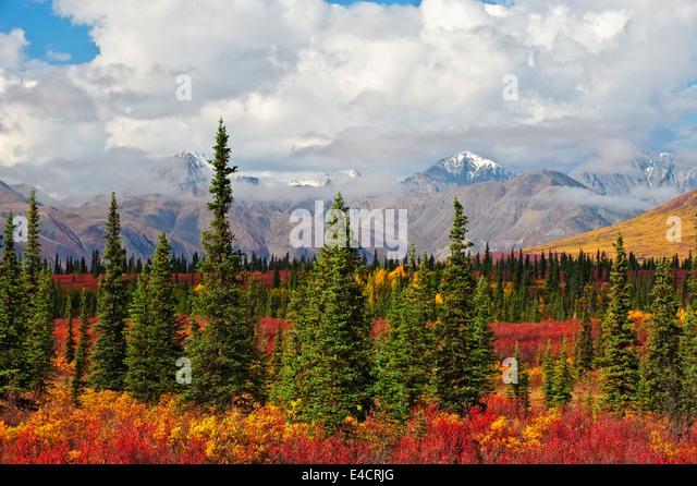 Herbstfarben und die Alaska Range außerhalb Denali Nationalpark, Alaska. Stockbild