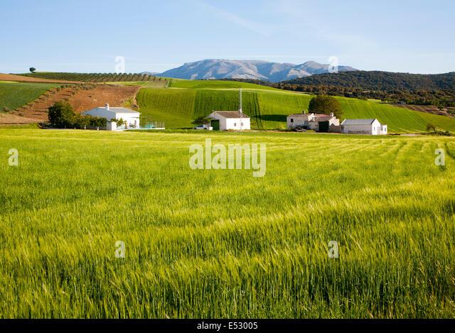 Bauernhaus und Scheunen inmitten einer sanften grünen Feldern Gerste Ernte in der Nähe von Alhama de Granada, Stockbild