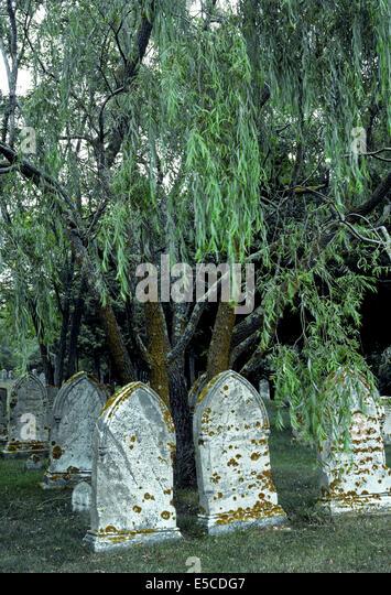 Alte Grabsteine aus den 1800er Jahren mit Wucherungen von Flechten finden sich in diesem New-England-Friedhof in Stockbild