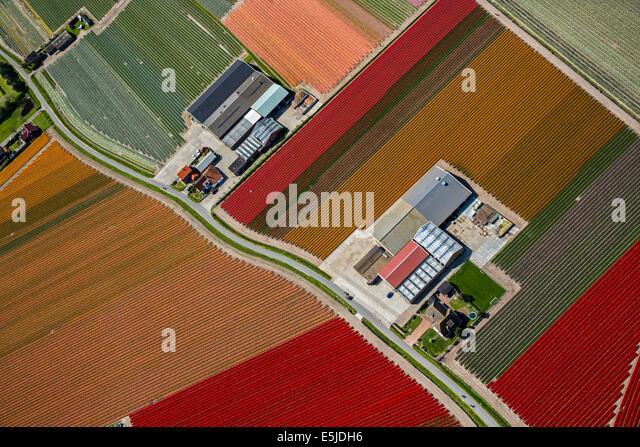 Niederlande Egmond Aan Den Hoef Tulip Felder Antenne Stockbild