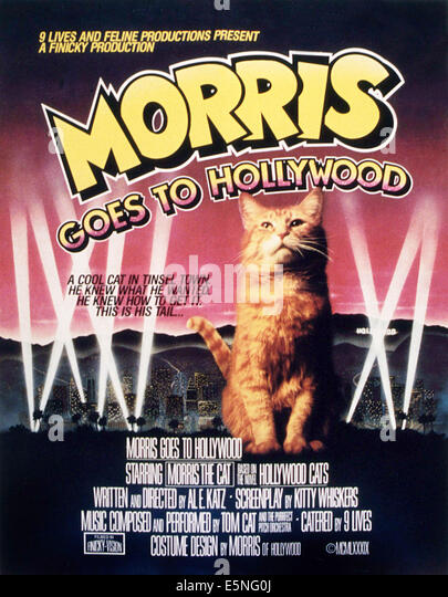 MORRIS GOES TO HOLLYWOOD, Morris die Katze, 1989 Stockbild