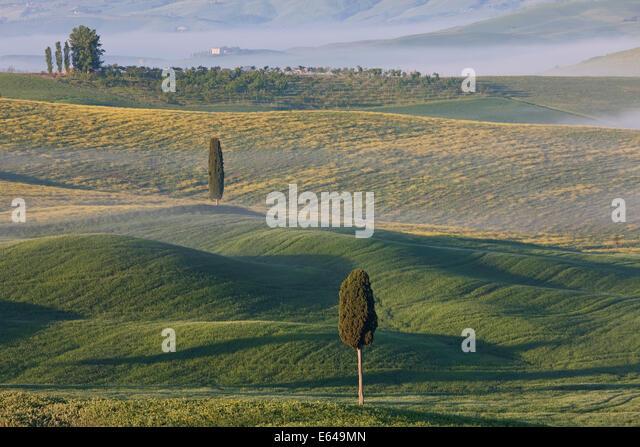 Bäume und Feld, San Quirico d ' Orcia, Val d ' Orcia, Toskana, Italien Stockbild