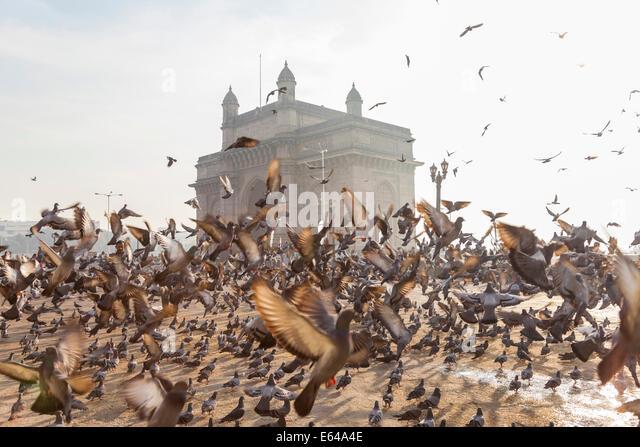 Tauben, India Gate, Colaba, Mumbai (Bombay), Indien Stockbild