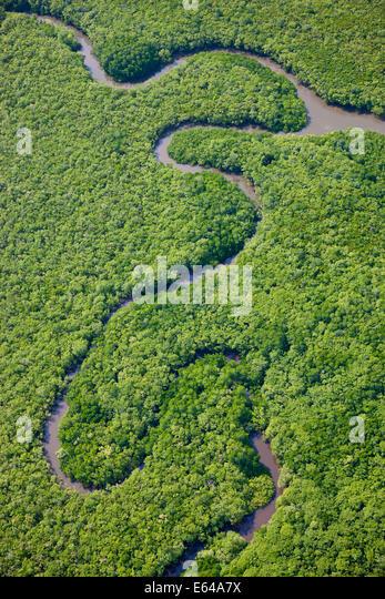 Luftaufnahme des Regenwaldes, Daintree River, Daintree Nationalpark, Queensland Australia Stockbild