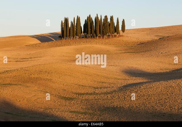 Toskanischen Zypressen in der Nähe von San Quirico d ' Orcia, im Val d ' Orcia, Toskana, Italien. Stockbild