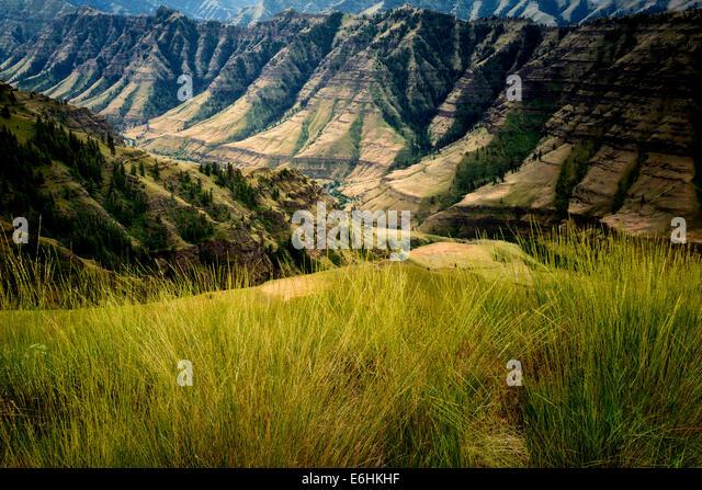 Gräser und Imnaha Canyon. Hells Canyon National Recreation Area, Oregon Stockbild