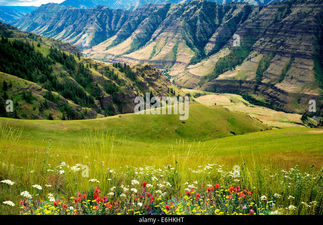 Wildblumen und Imnaha Canyon. Hells Canyon National Recreation Area, Oregon Stockbild