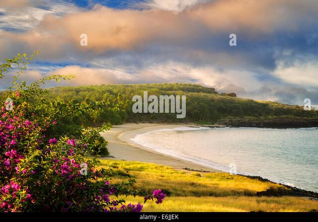 Strand im Four Seasons mit Bougainvillea-Blüten. Lanai, Hawaii. Stockbild
