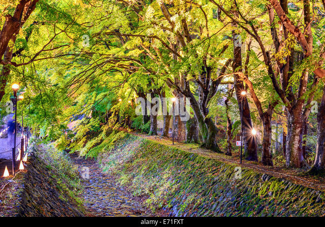 Maple Leaf Tunnel in Kawaguchi, Japan. Stockbild