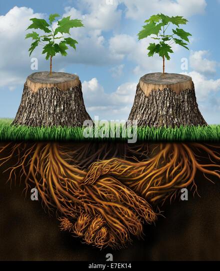 Einander helfen, als ein gegenseitigen Unterstützung Gruppe Geschäftskonzept als zwei gehackte Bäume Stockbild