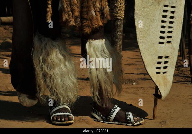 Amashoba Büschel von Kühen Tail auf Beine des Zulu-Krieger in feierlichen Kleid mit weißen Schild Stockbild