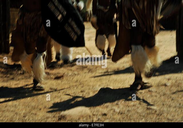 Szene von beweglichen Fuß zu Fuß Zulu-Krieger im traditionellen Zeremoniell Kleid Shakaland South Africa Stockbild