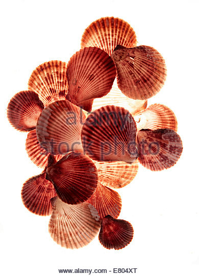 Roten & weiße Schale Muscheln Stockbild