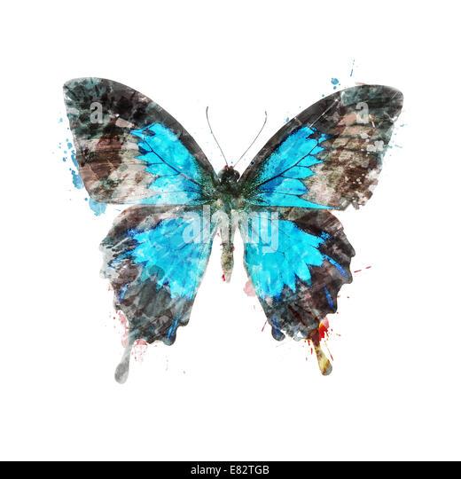 Digitalen Aquarellmalerei tropischer Schmetterling Stockbild