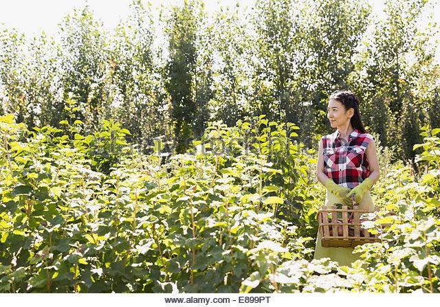 Frau mit Korb im Garten Stockbild