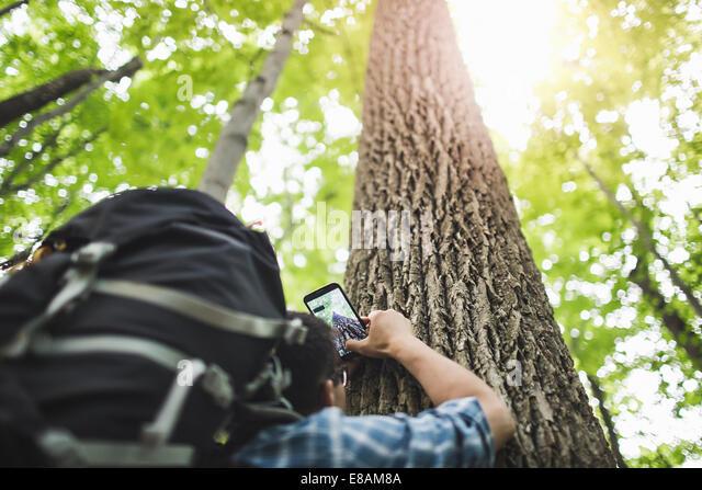 Menschen nehmen Foto von Baumstamm mit Kamera-Handy, niedrigen Winkel Stockbild