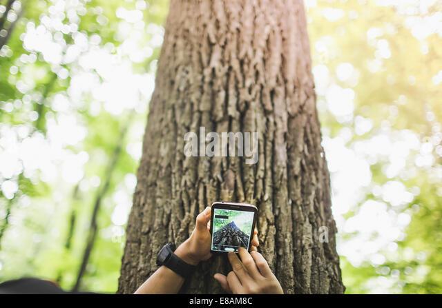 Foto der Person nehmen der Baumstamm mit Kamera-Handy Stockbild