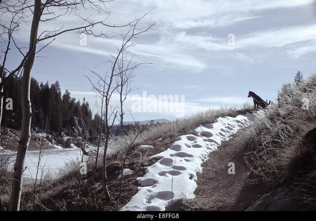 Hundesitting auf verschneiten Weg Stockbild