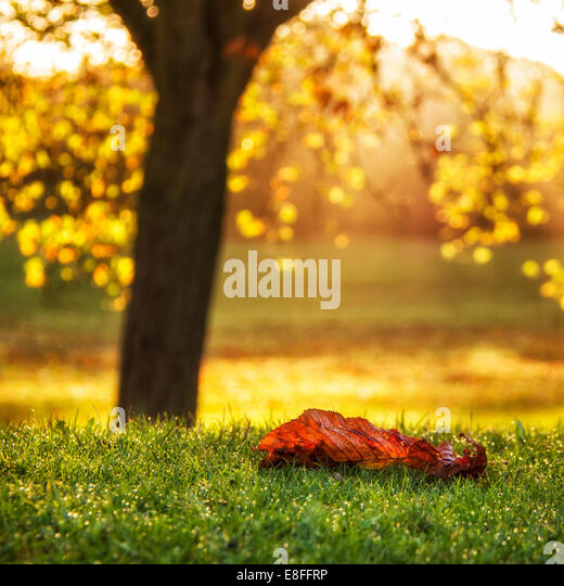 Blatt, auf dem Rasen liegen, Nahaufnahme Stockbild