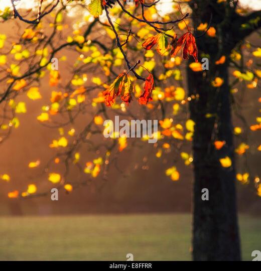 Nahaufnahme der Blätter am Baum Stockbild