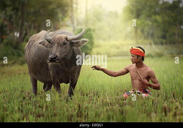 Indonesien, Jember, Mann mit Buffalo auf Feld Stockbild
