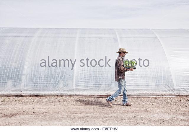 Mann mit Tablett von Pflanzen auf einem Bio-Bauernhof Stockbild