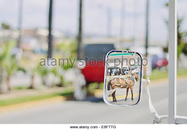 Reflexion von Pferd und Wagen im Außenspiegel Stockbild