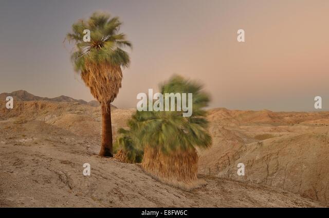 USA, California, Anza-Borrego Staatspark, windigen Five Palms in der Abenddämmerung Stockbild