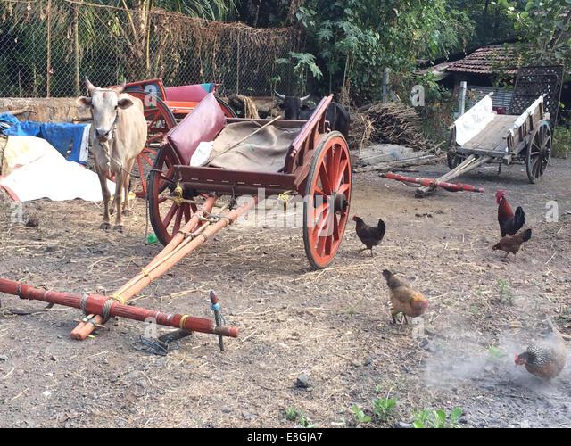 Indien, Maharashtra, Alibaug Dorf Hof außerhalb Dorf Haus Stockbild