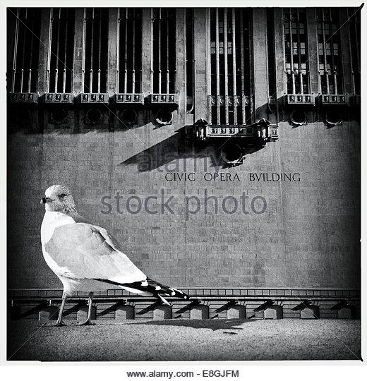 Vogel vor Gebäude Stockbild