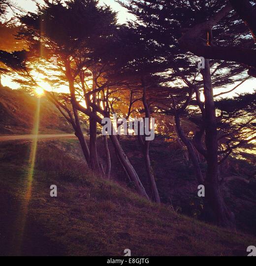 USA, California, San Francisco, View of San Francisco Zypresse - Stock-Bilder