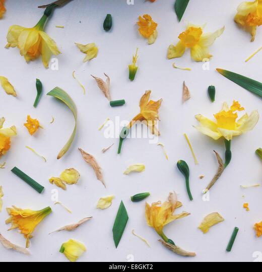 Muster aus der Blütenteile Stockbild