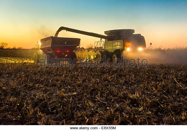 Ein Bauer Schnecken geerntet gelbe Körnermais aus einem Mähdrescher in einer Korn-Wagen während der Stockbild