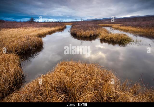 Herbst im Fokstumyra Naturreservat in Dovre Kommune, Fylke Oppland, Norwegen. Stockbild