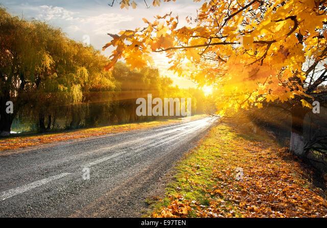 Autobahn durch den herbstlichen Wald in Sonnenstrahlen Stockbild