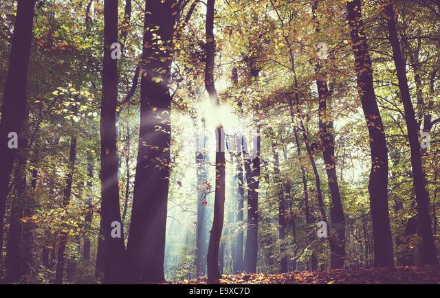Vintage gefiltertes Bild von einem dunklen Herbst Wald. Stockbild