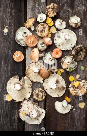 Sortiment von Waldpilzen auf Holzboden Stockbild