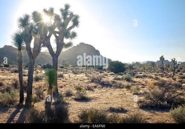 USA, California, San Bernardino County, El Cajon Drive Tag im Joshua Tree National Park Stockbild