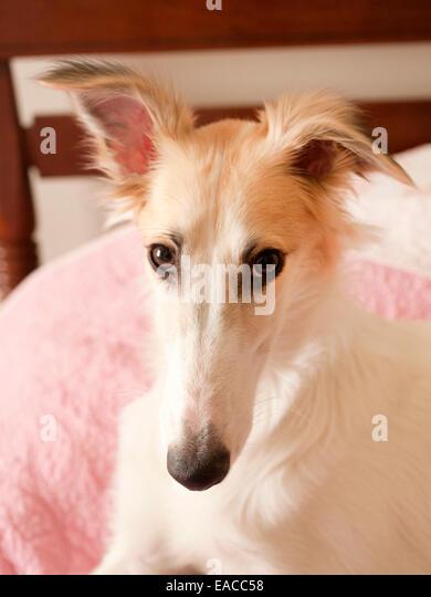 junger Hund mit Kamera Stockbild