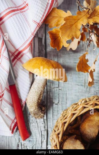 Aspen Pilz auf einem Küchentisch Stockbild