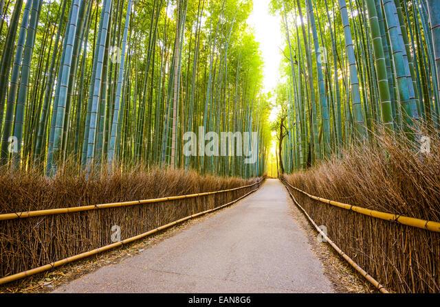 Kyoto, Japan Bambus-Wald. Stockbild